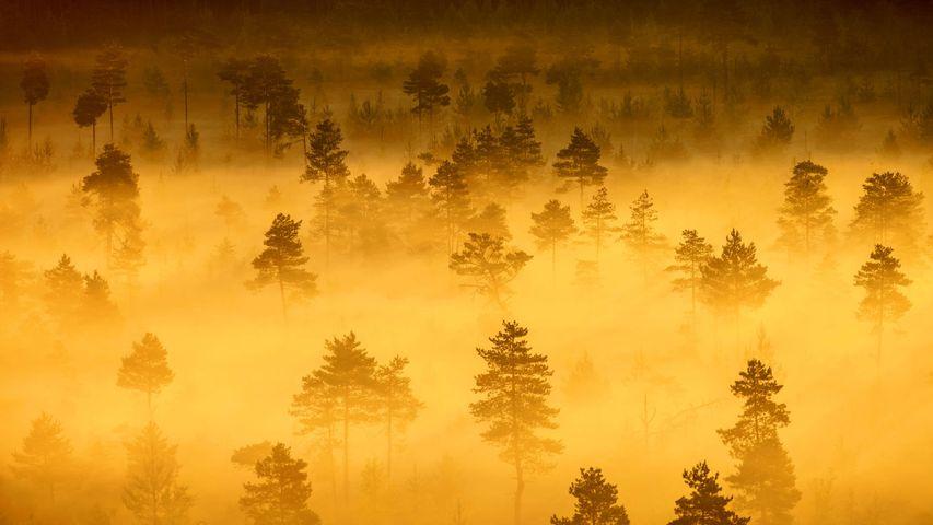 【今日雨水】特隆索国家公园,芬兰
