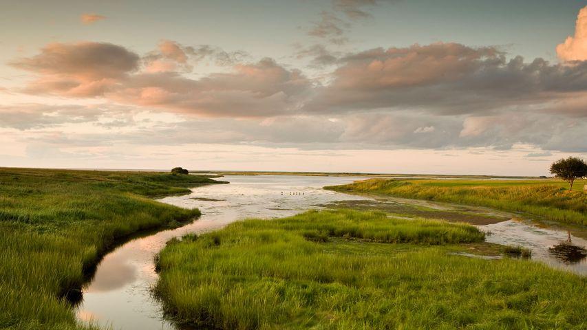Marshland in Shediac, N.B.