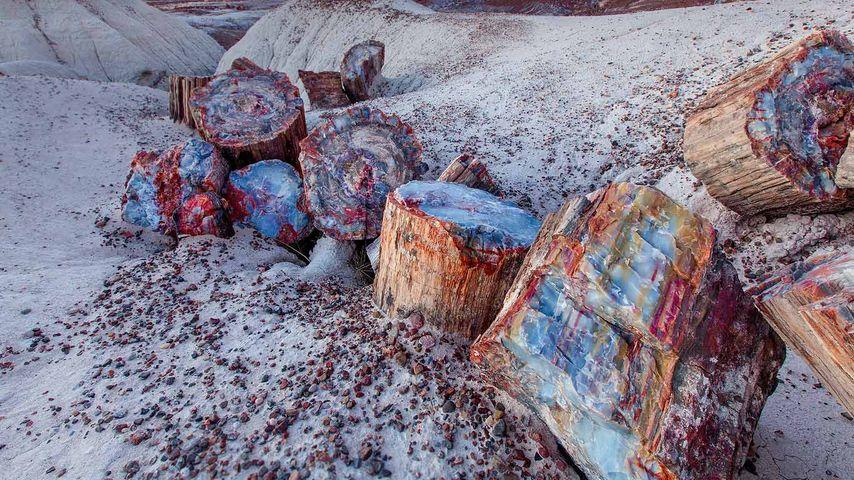 Petrified wood in the Petrified Forest National Park, Arizona, USA