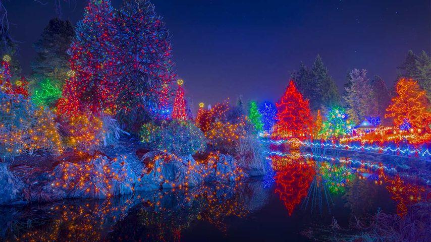 加拿大,温哥华,不列颠哥伦比亚,温哥华植物园的圣诞赏灯