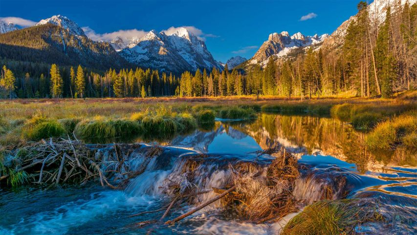 Beaver dam in the Sawtooth National Forest, Idaho