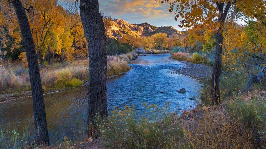 Herbstliche Idylle am Rio Grande, New Mexico, USA