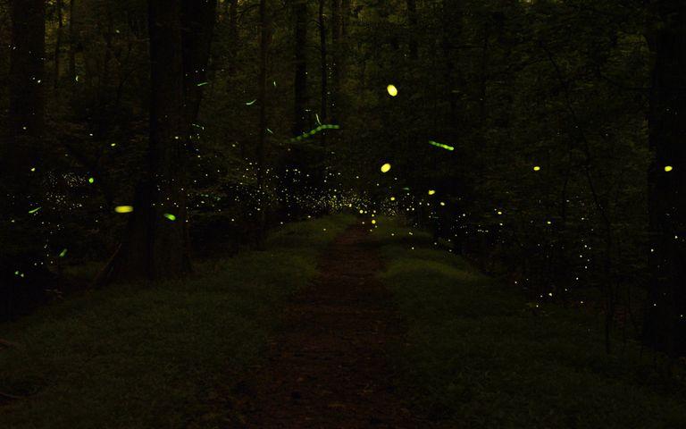 Light in Darkness Windows 10 Theme