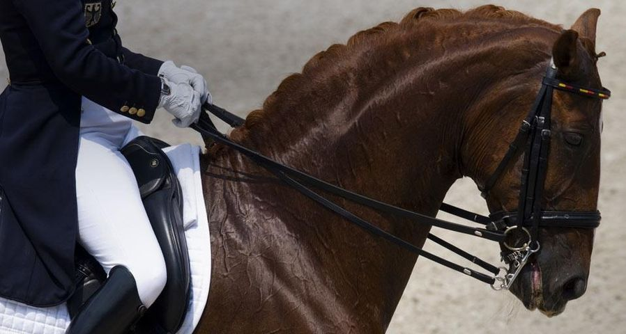 Dressurpferd und Reiter