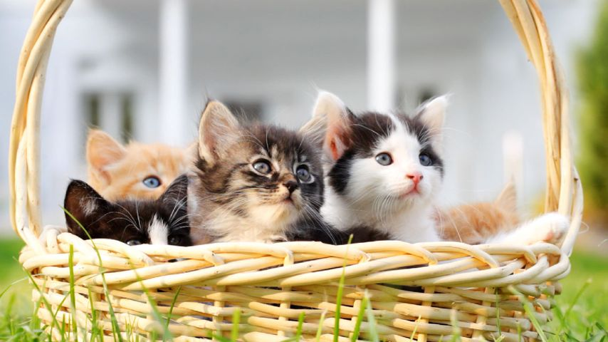 Korb voller süßer Kätzchen