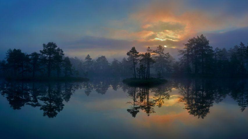 西曼兰省的一片湿地,瑞典