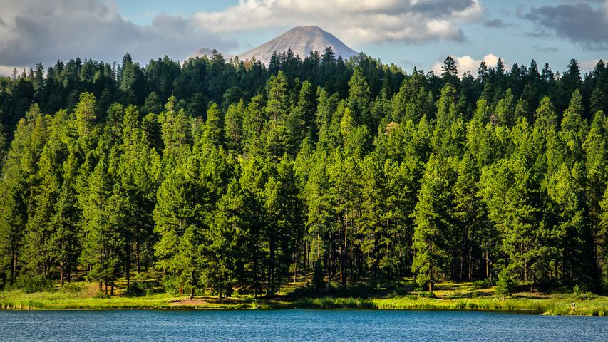 tree outdoor landscape water forest lake pond mountain