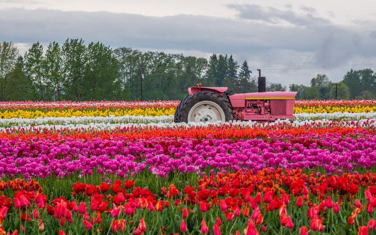 grass sky outdoor tractor land vehicle vehicle wheel flower
