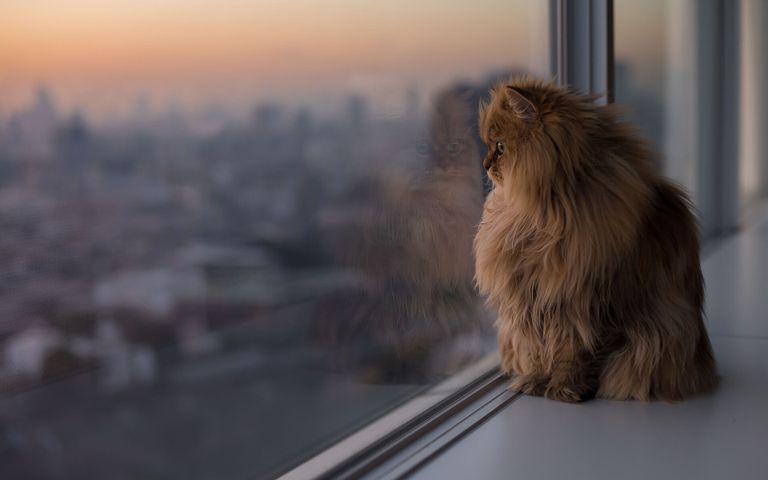 Dogs and Cats Windows 10 Theme