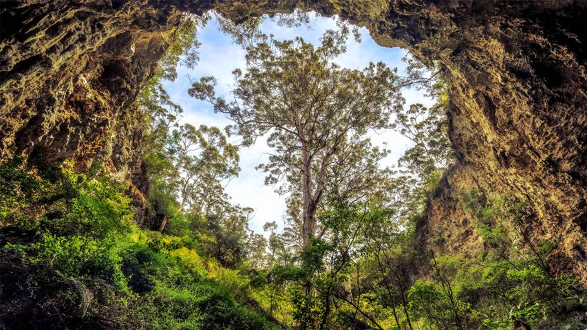 Giant karri tree at the entrance to a cave in Margaret River area, Western Australia