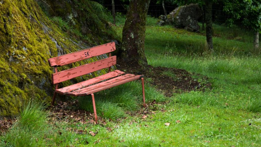 grass outdoor bench tree park furniture wooden plant