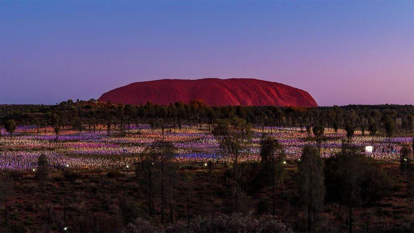 'Field of Light' by artist Bruce Munro at Uluru, Australia