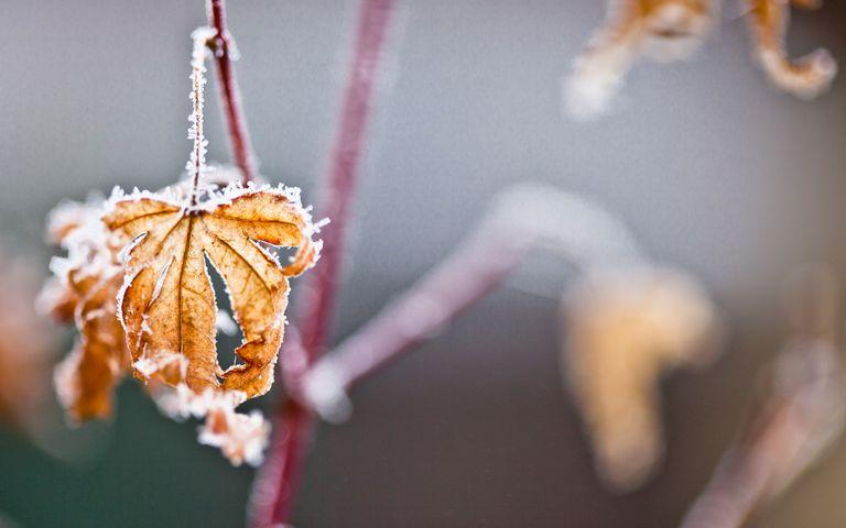 Frosty Art Windows 10 Theme