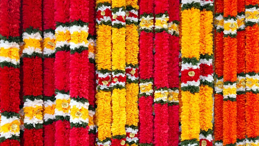 Garlands of red and yellow flowers, on Ugadi