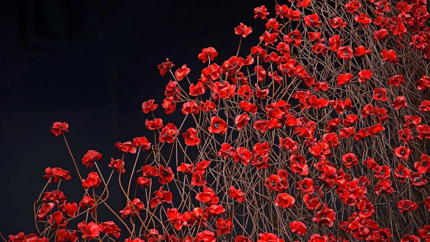 'Wave,' part of 'Blood Swept Lands and Seas of Red,' an art installation pictured here at the Imperial War Museum North in Manchester, England