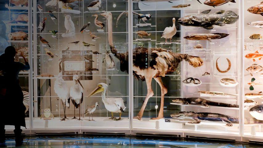 「国立科学博物館」東京, 台東区
