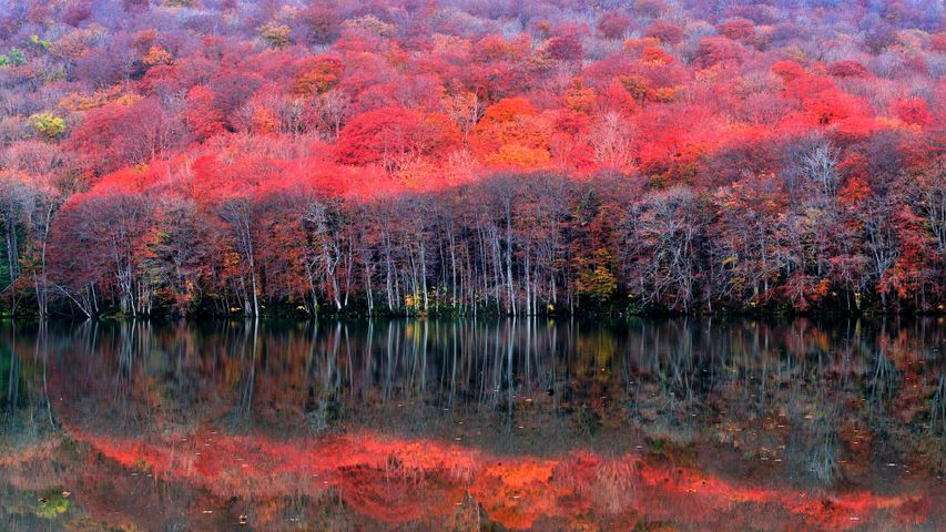 「晩秋の蔦沼」青森, 十和田市