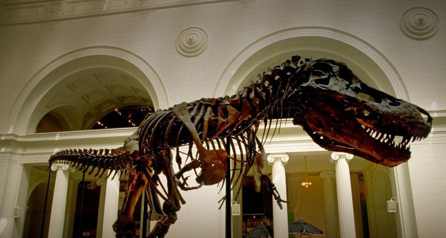 芝加哥费尔德博物馆展出的霸王龙