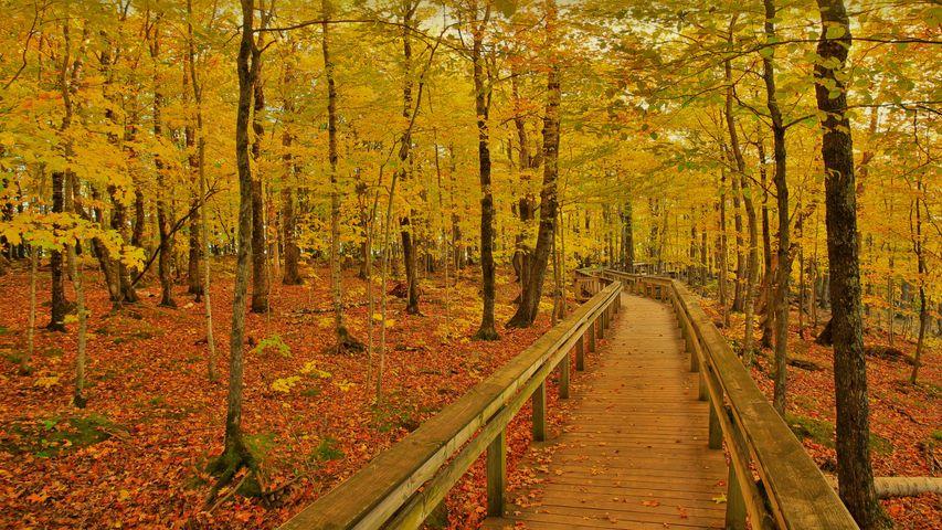 豪猪山荒野国家公园中的小路,美国密歇根州