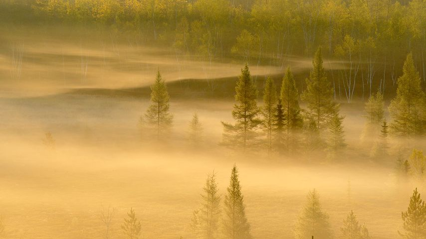 Spring trees in a misty valley, Lively, Sudbury, Ontario