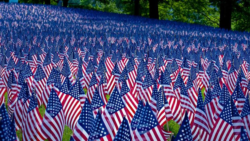 Field of flags displayed for Memorial Day, Boston, Massachusetts