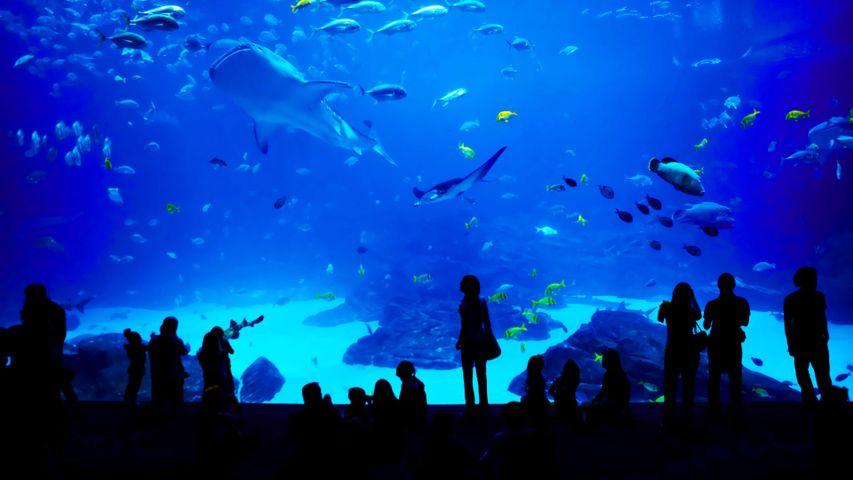The Georgia Aquarium in Atlanta