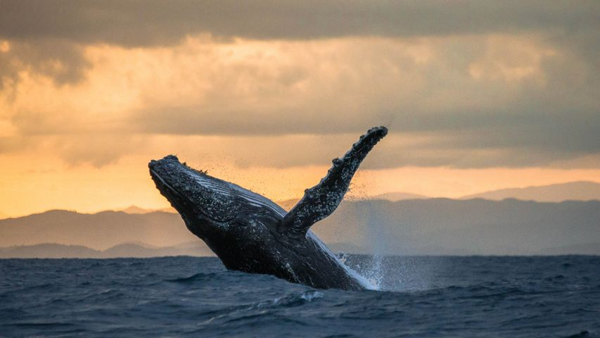 Whales and Dolphins PREMIUM Wallpapers for Windows 10