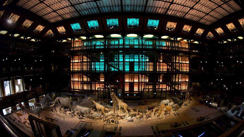 Grande galerie de l'Évolution, Muséum national d'histoire naturelle à Paris