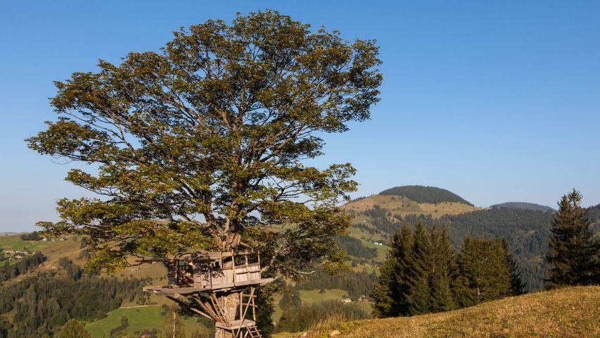 Treehouses PREMIUM 4K Theme for Windows 10