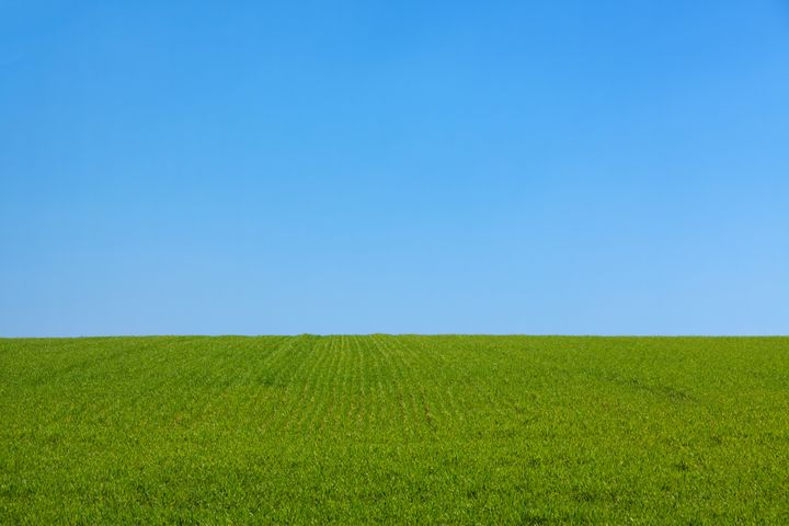 grass sky outdoor field landscape blue sky plant nature