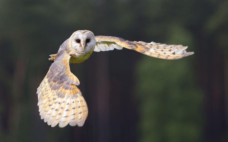 bird animal owl falcon reptile bird of prey eagle beak
