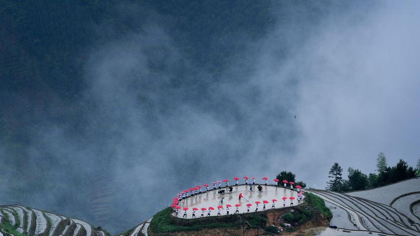 【今日谷雨】平安村种植节期间龙胜梯田的忙碌景象(© gary76973/Getty Images)