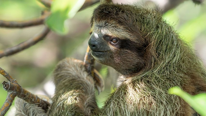 Sloths PREMIUM Windows 10 Theme