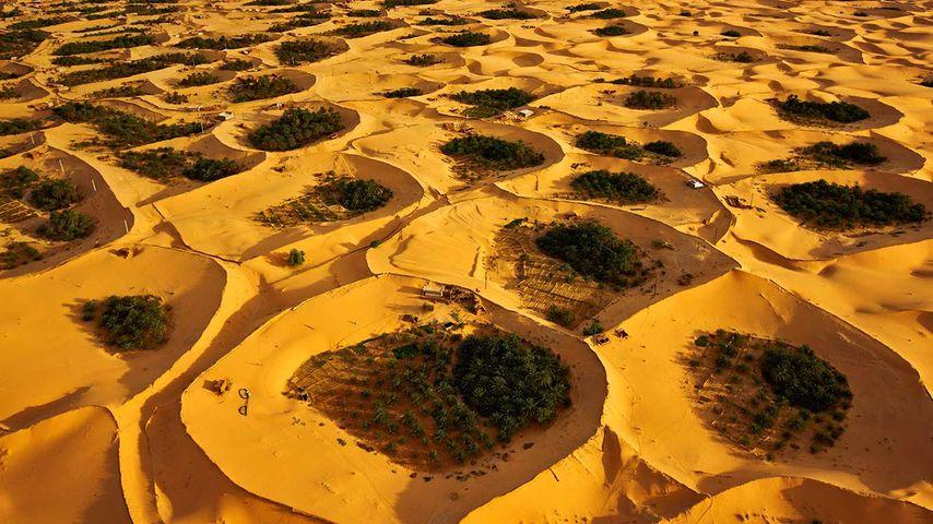 阿尔及利亚,提米蒙附近的沙漠绿洲