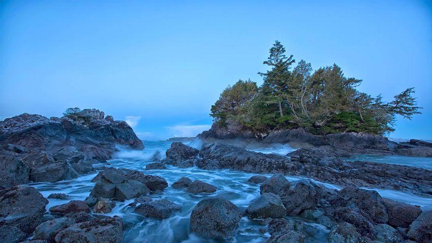 Shoreline, près de Tofino, sur l'île de Vancouver, Colombie-Britannique, Canada