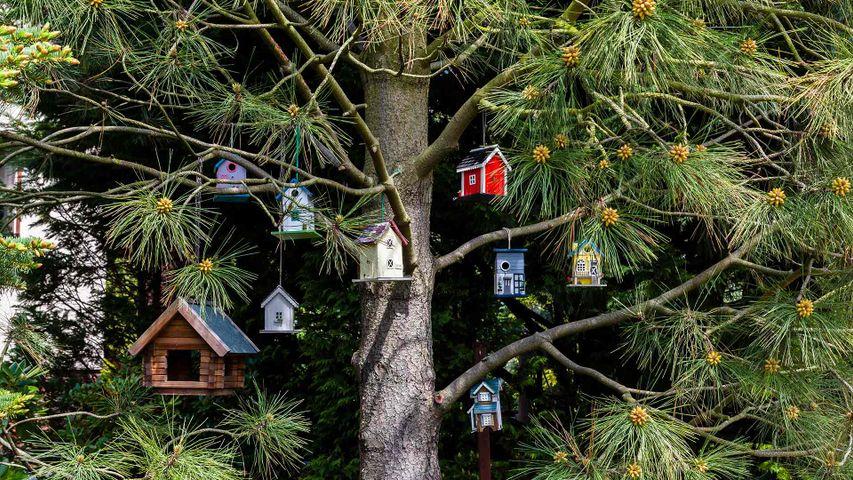 挂在树上的小鸟舍