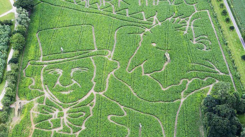 A Roald Dahl-themed maze in York
