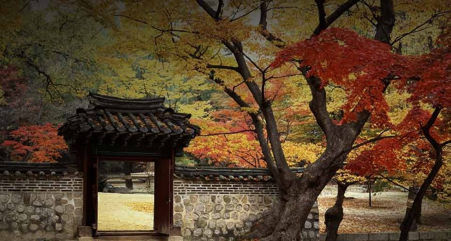 Garden at Changdeokgung Palace, Korea, a World heritage site