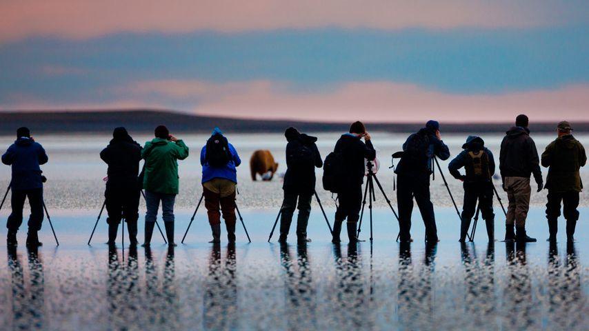 Fotografen beim Ablichten eines Braunbären im Lake-Clark-Nationalpark, Alaska