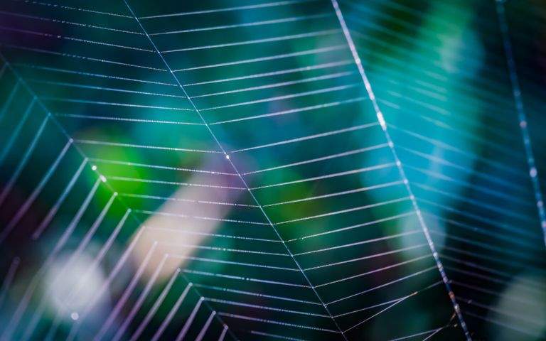 web outdoor object line colorfulness light spider web green