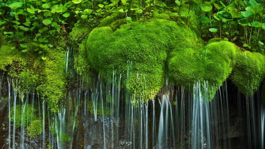 Wasserfall und Moos, Shenandoah National Park, Virginia, USA