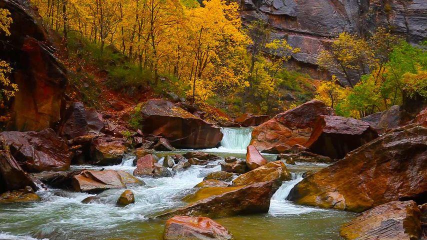 美国犹他州锡安峡谷,处女河北流