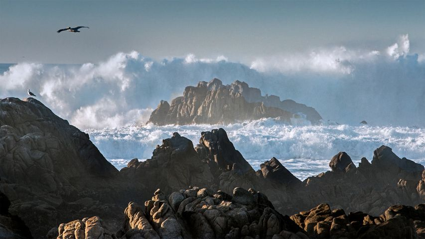 Huge waves crashing on rocks along Asilomar State Beach, Pacific Grove, California