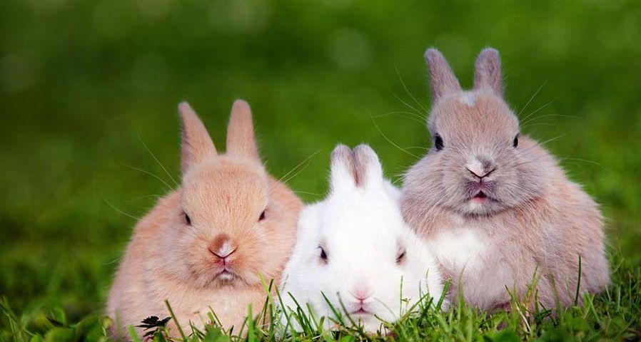 Three rabbits sitting on the grass
