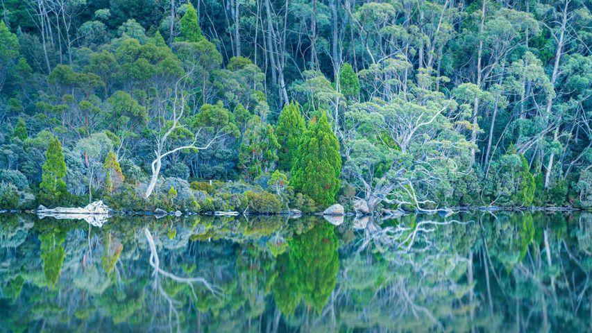 Lake Dobson in Mount Field National Park of Tasmania