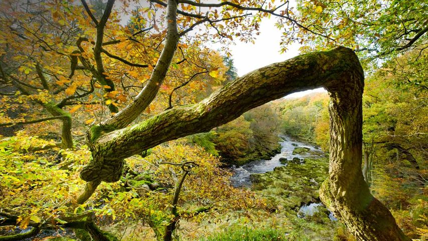 Views from Strid Wood over the River Wharfe in North Yorkshire