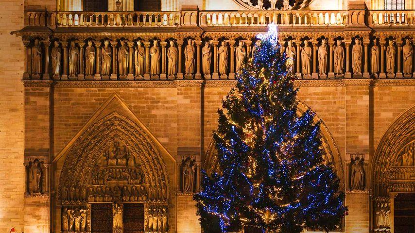 Cathédrale Notre-Dame de Paris et sapin de Noël, Paris