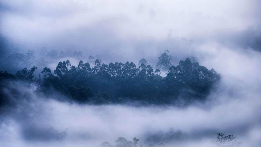 雾气环绕的森林,喀拉拉邦慕那尔市,印度