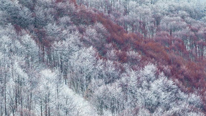 Partly snow-covered slope in Val Cervara, an old-growth beech forest, in Abruzzo, Italy