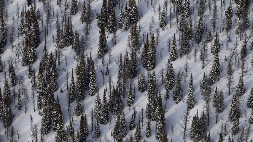 Mount Goodsir and surroundings in Yoho National Park, B.C.